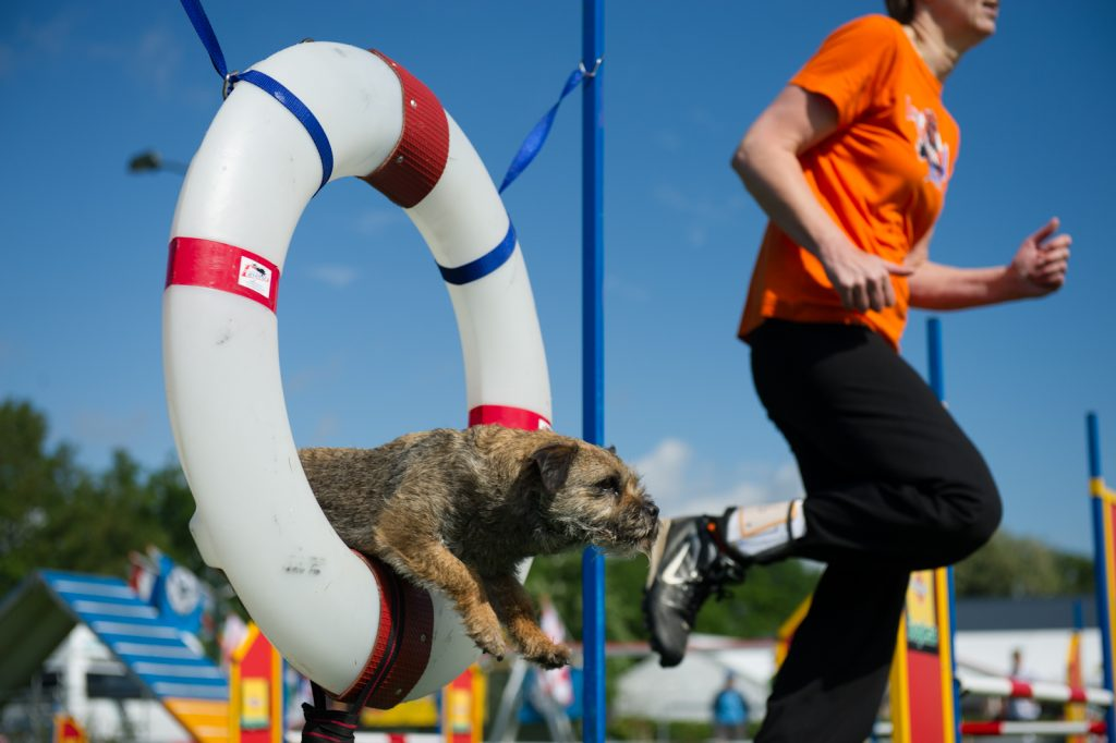 dog jumping through tire in dog agility competition erie, pa