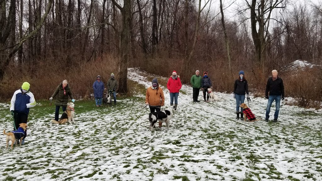 Group of Dogs from Something Els Dog School on a Dog Socialization Walk at Pleasant Ridge Park Fairview, PA