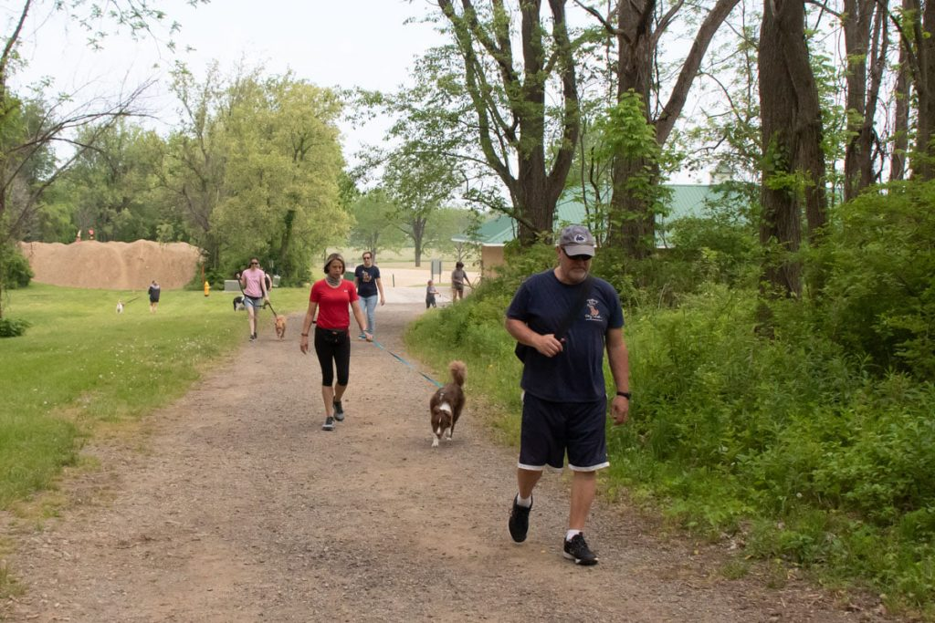 dog walk for dog obedience and dog socialization in erie pa