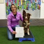 dog completing dog obedience class near erie pa