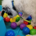 puppy training class in ball pit erie pa